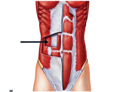 来了加拿大腰背痛剧增 医师建议:动起来