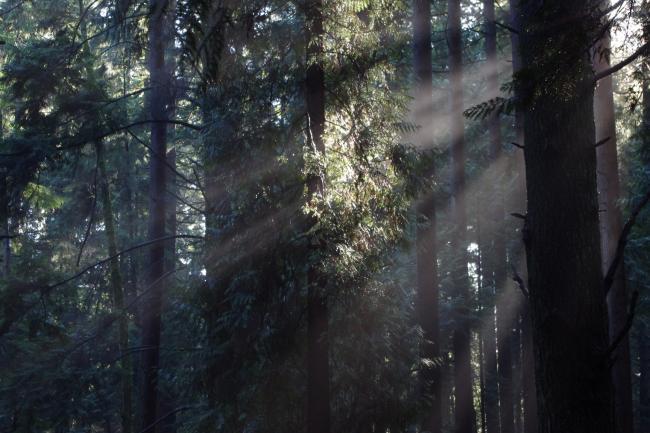 1 树林.JPG