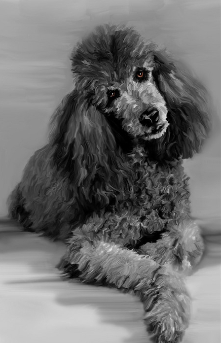 Painted Poodle small version-XL.jpg