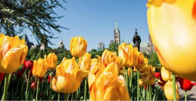 全球最大郁金香节要来了!奉献观赏路线