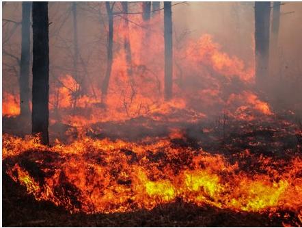 又来了!卑诗北部爆发山火 有社区进入紧急状态