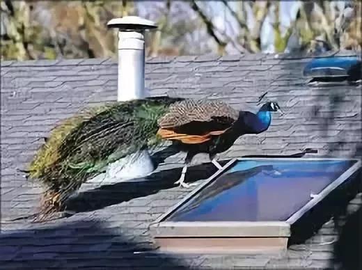 WeChat Image_20190513142227.jpg