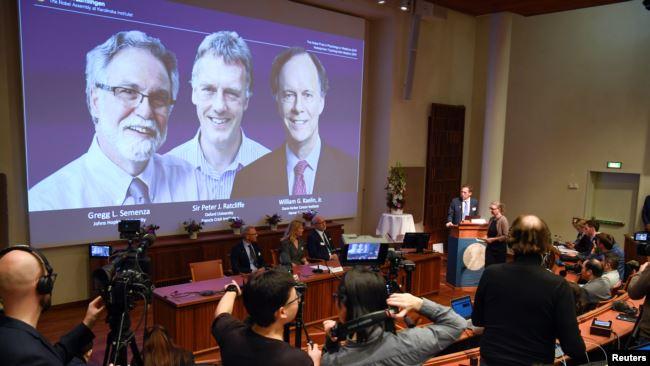 瑞典诺贝尔委员会在斯德哥尔摩宣布三位科学家荣获2019年的诺贝尔生理学和医学奖。(2019年10月7日)