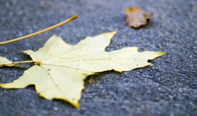 秋季过敏:咳嗽、过敏和皮癣