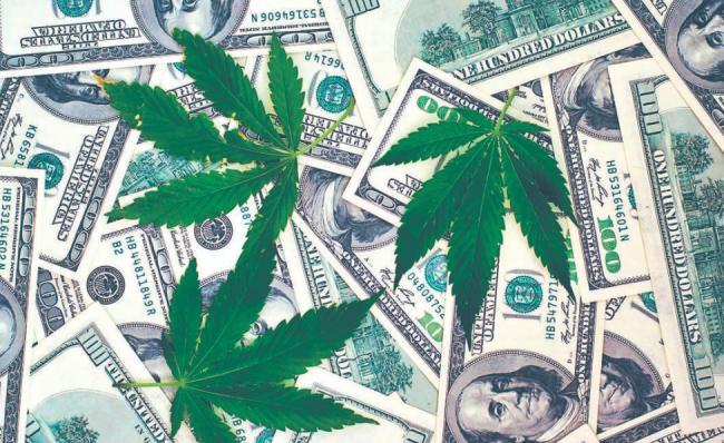 大麻投资干货,分析师给你划重点