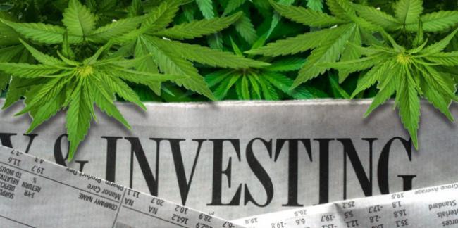 必看!优质大麻投资项目 5000倍回报率投资机遇