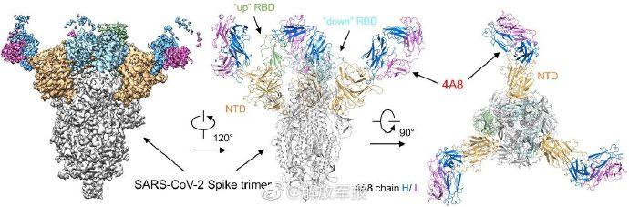 陈薇团队:新冠病毒抗体研究取得重大突破
