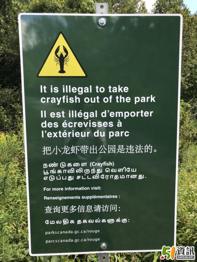 多伦多抓小龙虾被罚*480:公园立有中文告示牌