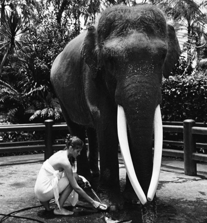 阿萊希雅強調,自己在大象上拍照,是對大自然的熱愛,「我愛動物,我愛大象!我真的很喜歡峇里島」。(翻攝自IG)