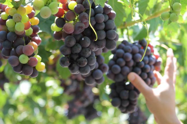fruit06.JPG