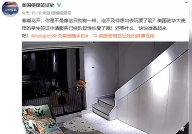 """骂留学生是""""狗""""?美驻中国使馆这回惹麻烦了"""