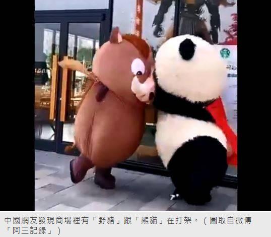 野猪跟熊猫打架?这一幕被拍 让人笑翻了