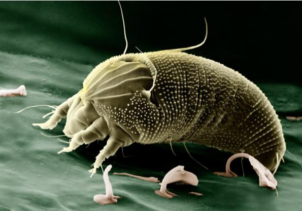 睡梦中被这种虫子叮咬 一家三口隔天陈尸床上