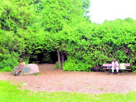 多伦多中央岛丛林迷宫重建有望 商人愿捐20万