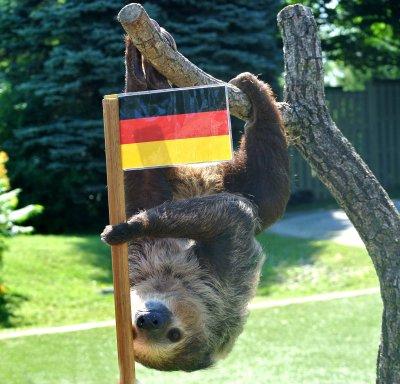 将在动物园内生活,因为鲍博还很年轻,所以它的运动量相比其他树懒要大