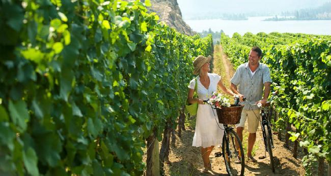 「湯普森歐墾娜根 葡萄酒」的圖片搜尋結果