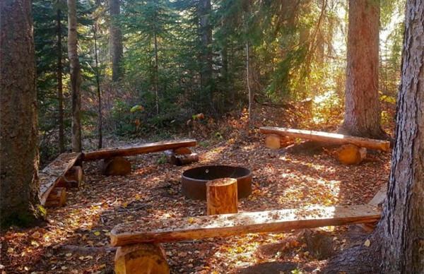 从冬青灌木到牛尾松,甚至是大部分树干的内侧都可以