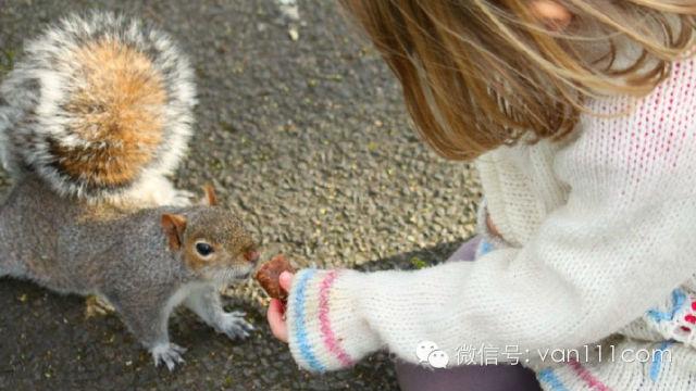 """没事闲逛,要是遇到了小松鼠,你会说:""""好可爱"""";              可"""