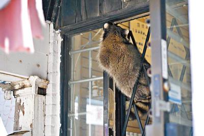 冬天将至,市民宜及早准备,以防有小动物入屋过冬