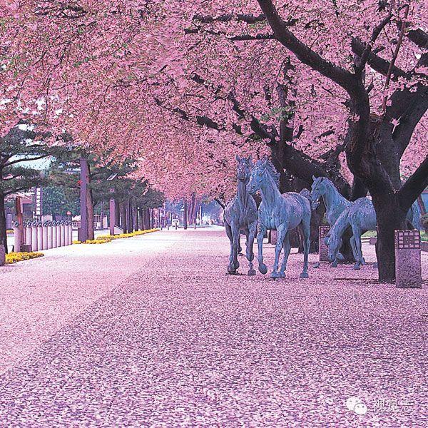 樱花落成河,一见倾人心