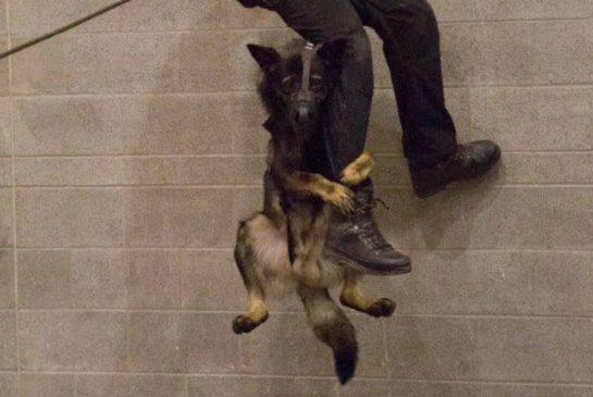 police-dog.jpg.size.xxlarge.promo.jpg