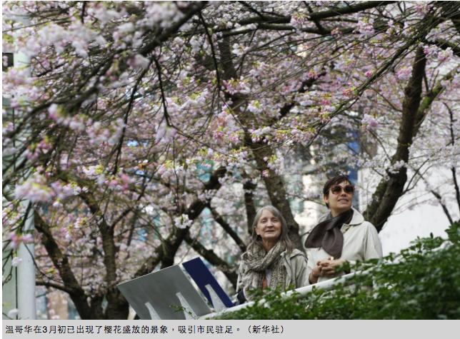 赏樱花去吧 优发国际已成一片粉红花海!