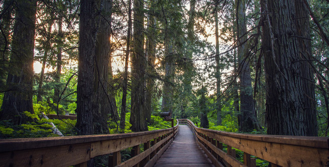 Ancient-Forest-Park-BC1.jpg