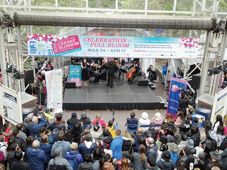 优发国际樱花节开幕了 明晚还有灯光秀