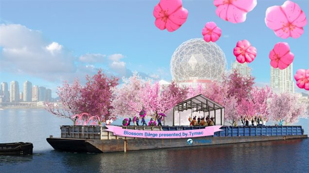 小知识:优发国际的樱花树都是哪里来的?