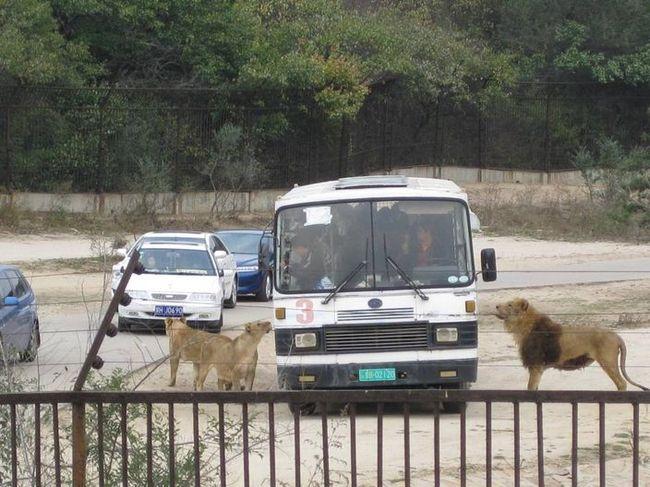 北京动物园老虎袭击客人