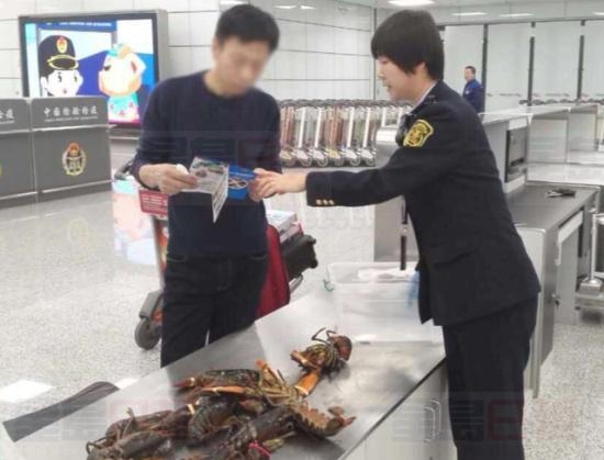 加拿大乘客携带10只鲜活大龙虾闯中国海关