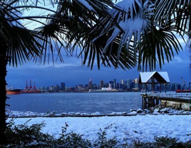 vancouver-snow-palm-trees-670x520.jpg
