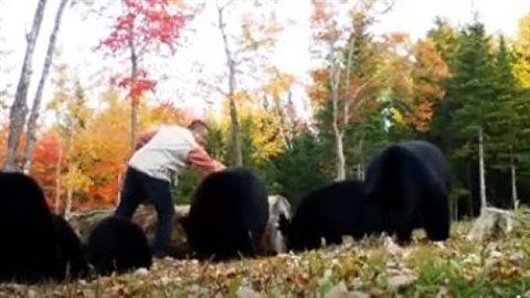 加国夫妇创建喂野生黑熊旅游项目 你敢去吗?