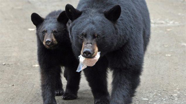 170111_003o8_rci-bear_sn635.jpg