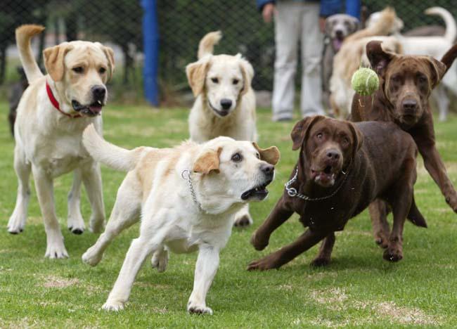 一群饿狗飞奔而来,新移民如何面对焦虑?