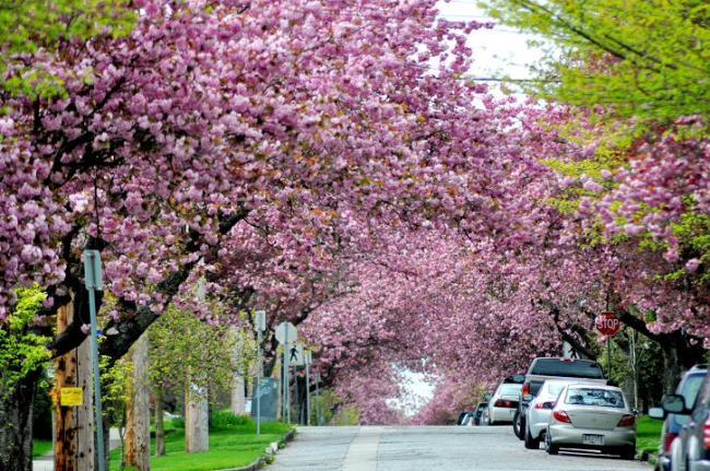 捱过25年来最寒冬 大温正式迎来春天