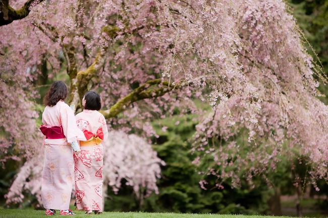 大温一周好去处:4月1日-4月8日 唤醒春天的樱花就要占领温哥华
