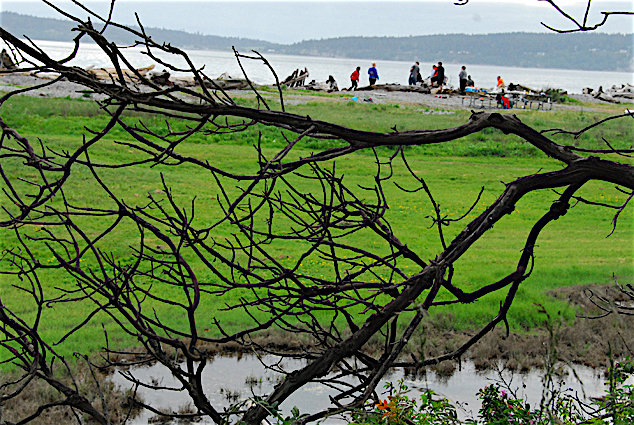 Camano Island:隐世小岛上的艺墟盛宴