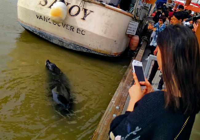 海狮拖落水变国际新闻 被咬童有细菌感染风险