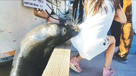 海狮伤女童留大血印 妈妈发文讲述惊险始末