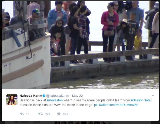 被拉下水女童父母辟谣被骂 海狮成人人拍照的网红