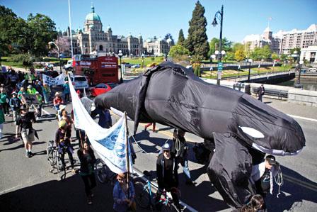 跨山油管工程料今秋动工 环保团体一连4日抗议