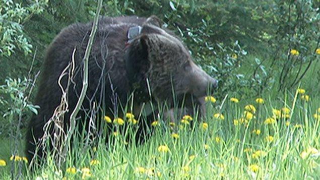 170627_x47gu_rci-bears_sn635.jpg