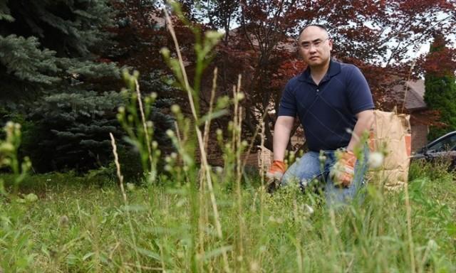 自家草坪4年来杂草丛生 优发国际华人被市府气炸了