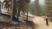 山火毁5300万立方米木材 卑诗林木业复元至少需5年