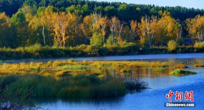 这个世界上面积最大的人工林 秋天竟这么美