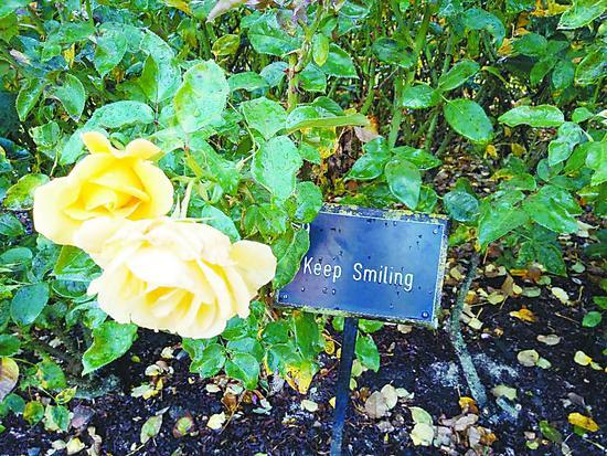 探访伦敦玫瑰园 花名尤胜花香