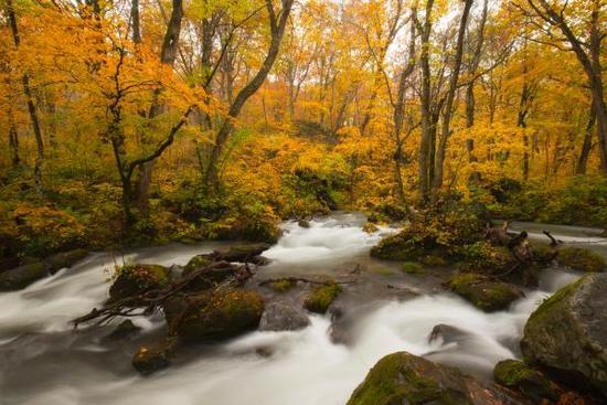 今年秋季最美的赏枫线路都在这里了