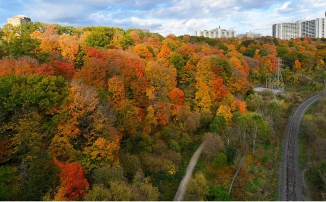 多伦多秋季十大最美赏枫地 附攻略