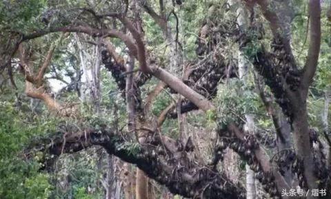 男子野外发现大树结满果子,走近吓出汗